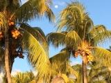 <h5>November: Sophie auf Mauritius</h5><p>Lost in paradise!</p>