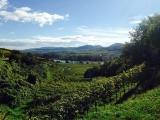 <h5>Oktober: Petra in Wachau</h5><p>Bei der Weinlese im Krems</p>