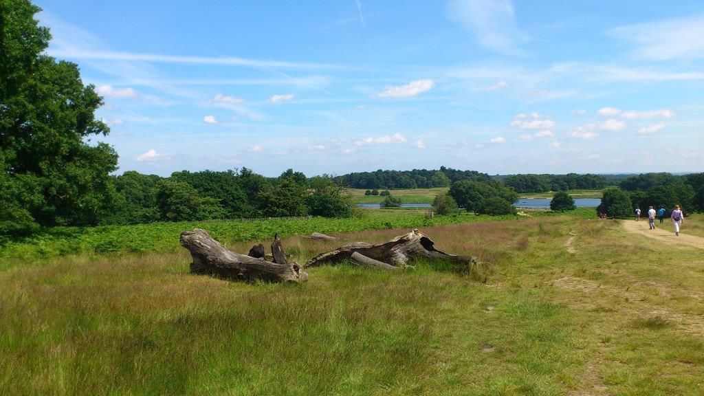 10 Quadratkilometer: Der Richmond Park ist der grösste Londoner Park.