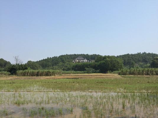 Abkürzungen durch Reisfelder