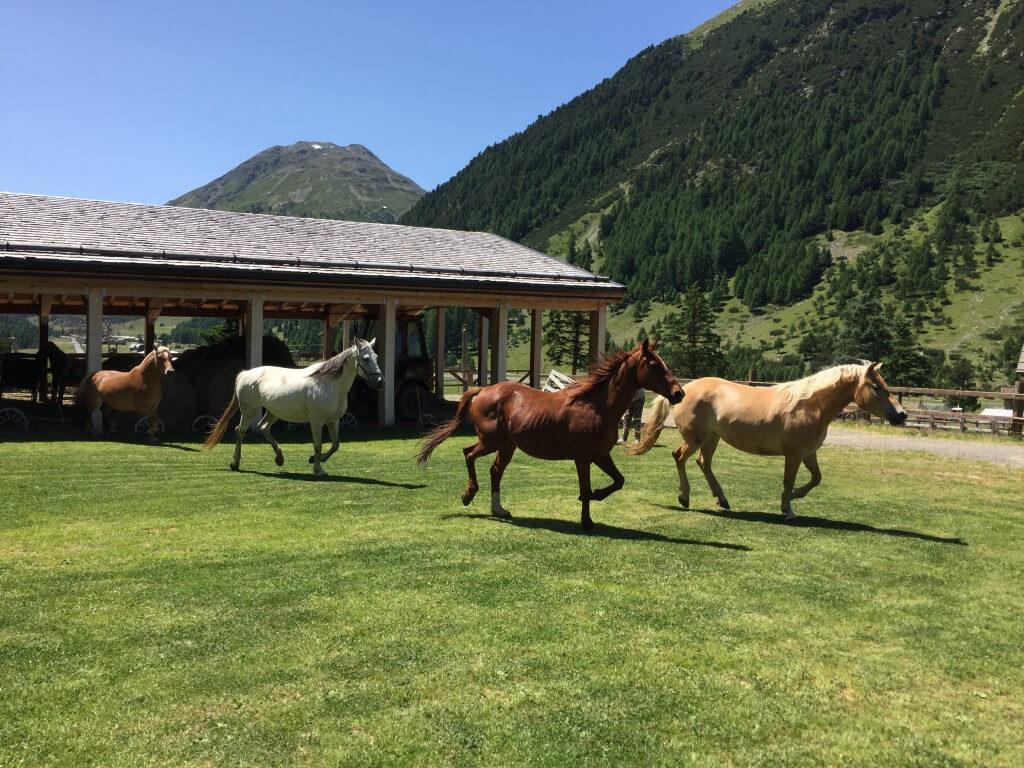 Pferderanch und Hochseilpark – Livigno für Familien