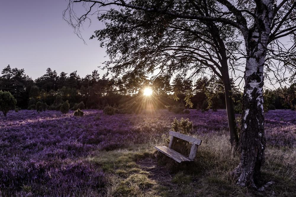 Digital Detox Country – die Lüneburger Heide