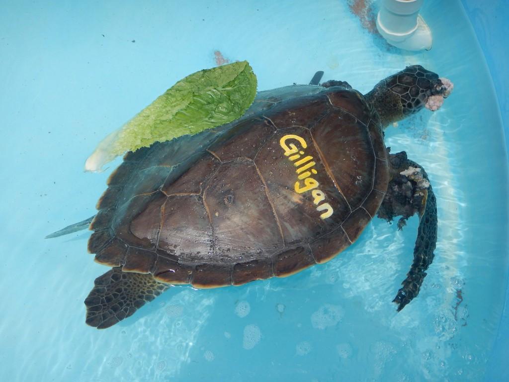 Tolle Süße Malvorlagen Von Schildkröten Fotos - Entry Level Resume ...
