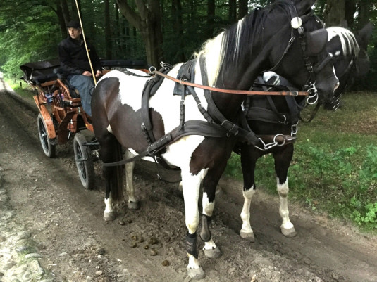 Die hübschen Pferde hat er bei ebay gekauft...