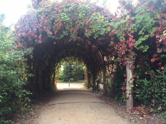 Gänge mit Weinreben am Kastellanhaus