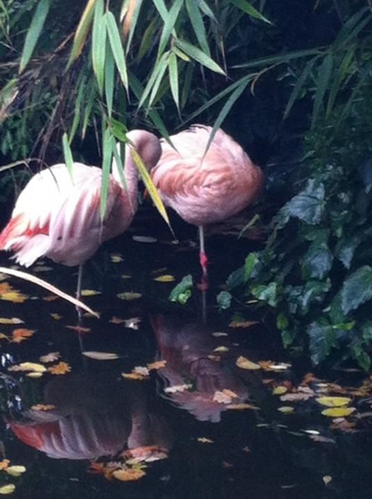 Flamingis Roof Garden