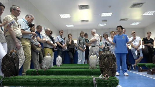 Abu Dhabi, Falcon Hospital, Wartesaal