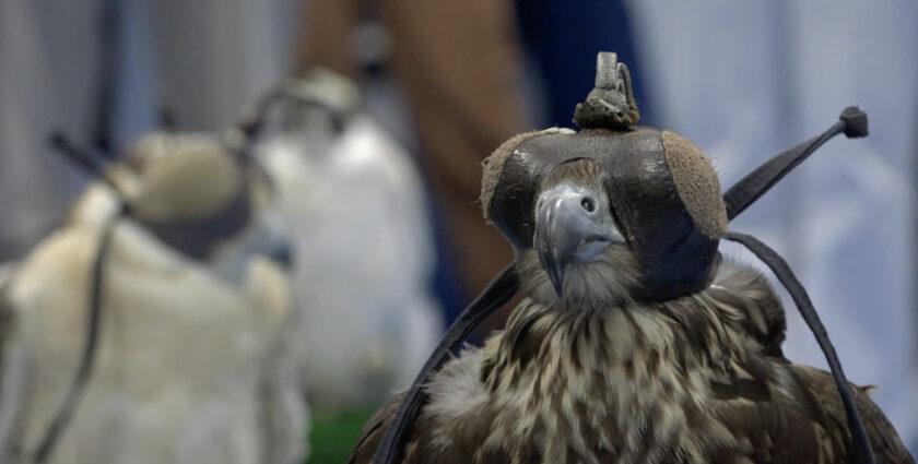 Abu Dhabi Falcon Hospital: Beautypflege für Jagdvögel