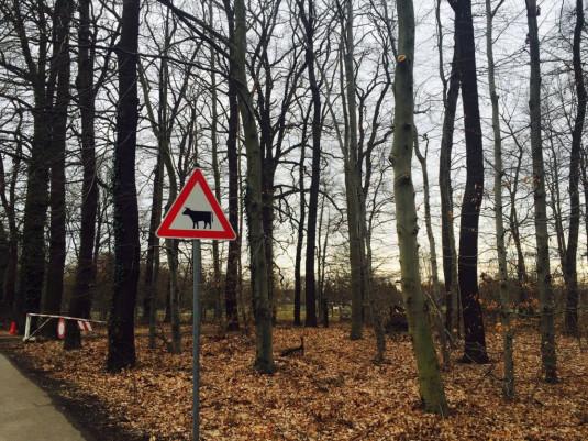 Angrenzender Wald