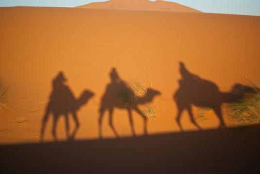 Kamele in Marokko