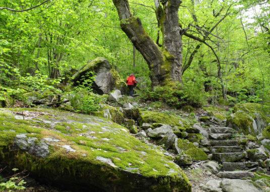 Durch den Wald zum Wasserfall