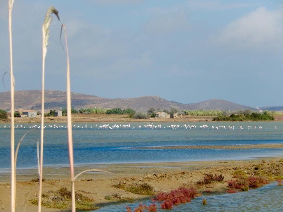 Flamingos beim Salzsee Lemnos Limnos