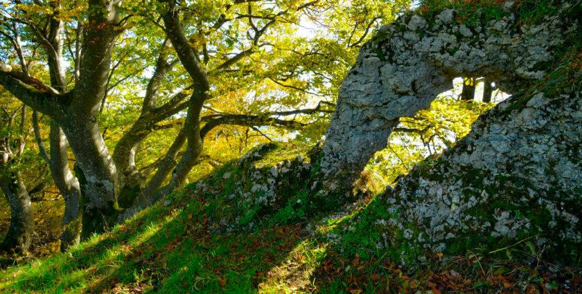 Im Solothurner Jura sind die Alten am schönsten