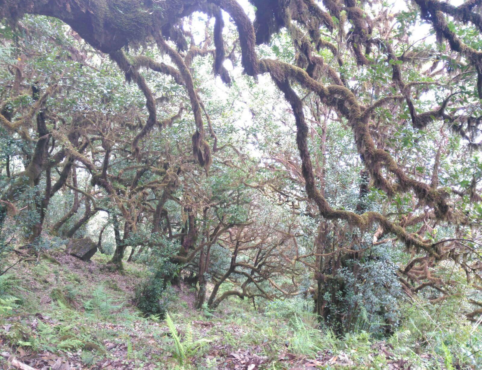 Madeira_Bäume_1