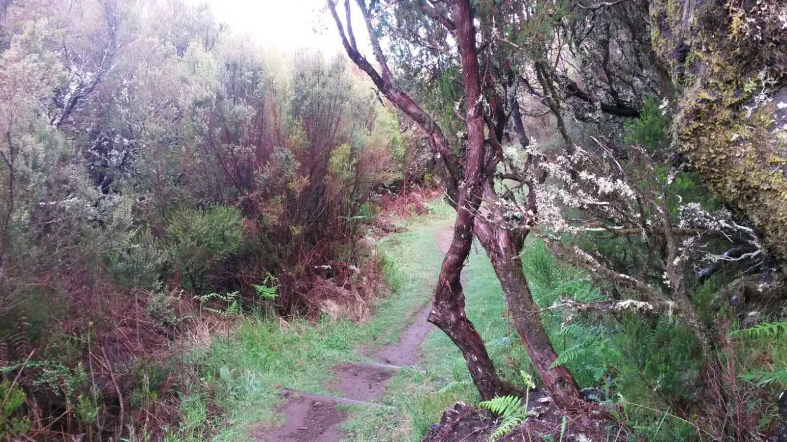 Madeira_Bäume_2