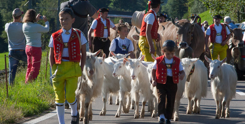 Tradition à discrétion: Alpabzüge & Älplerfeste 2016