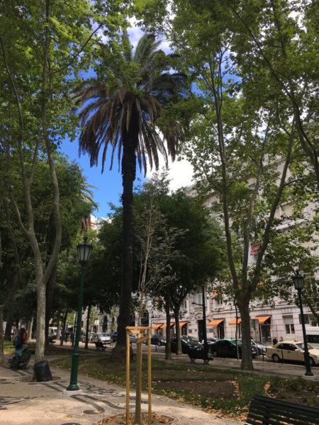 Lissabon Portugal Park