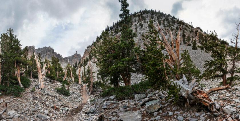 4844 Jahre im Nichts – die alten Bäume im Great Basin Nationalpark