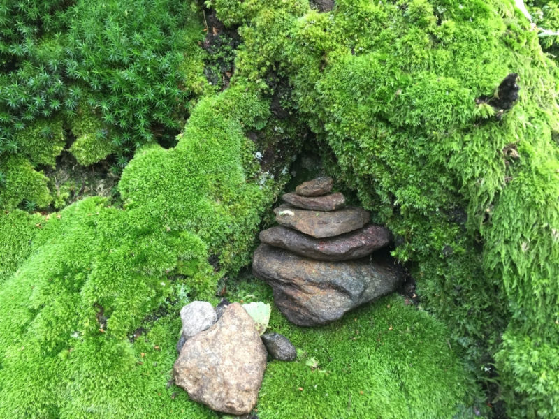 Wald Yogaweg Tessin Wandern Gambarogno