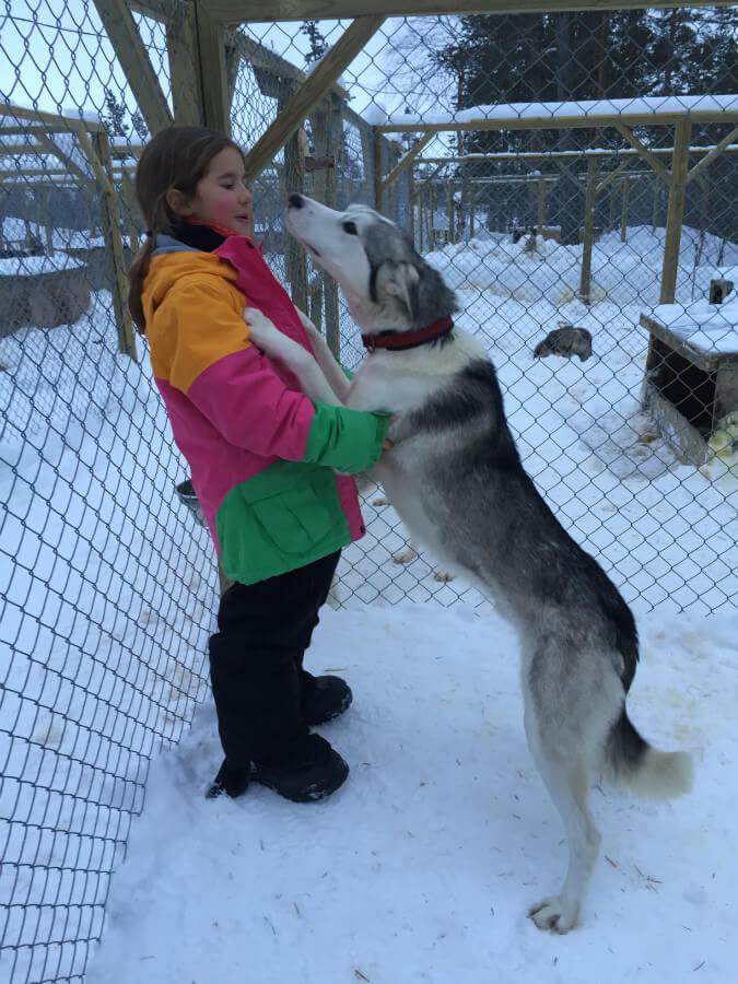 lappland-schweden huskys hundeschlitten mushen winter schnee