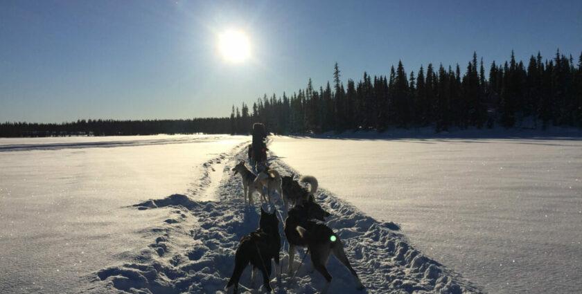 10 Dinge, die Du für Hundeschlittenferien in Lappland wissen musst