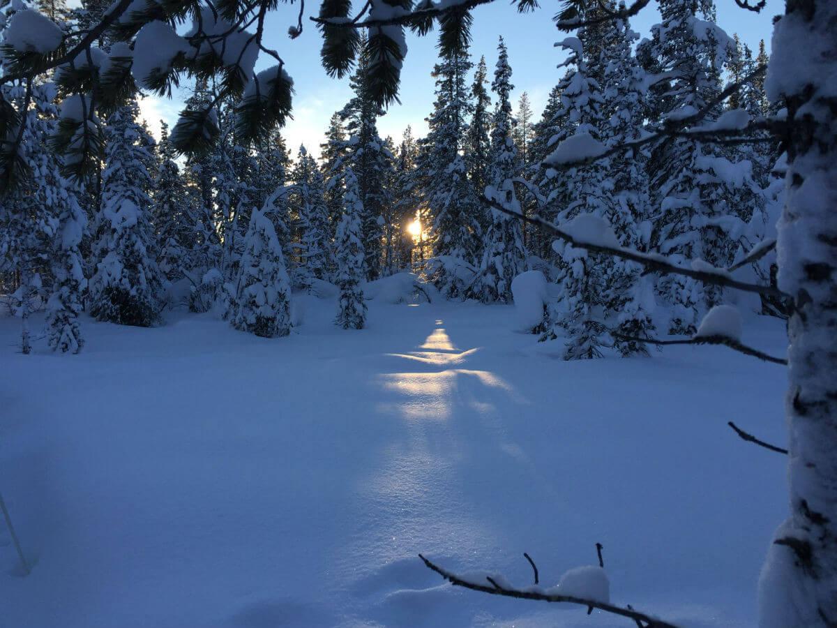 llappland-schweden-huskys hundeschlitten mushen winter schnee landschaft