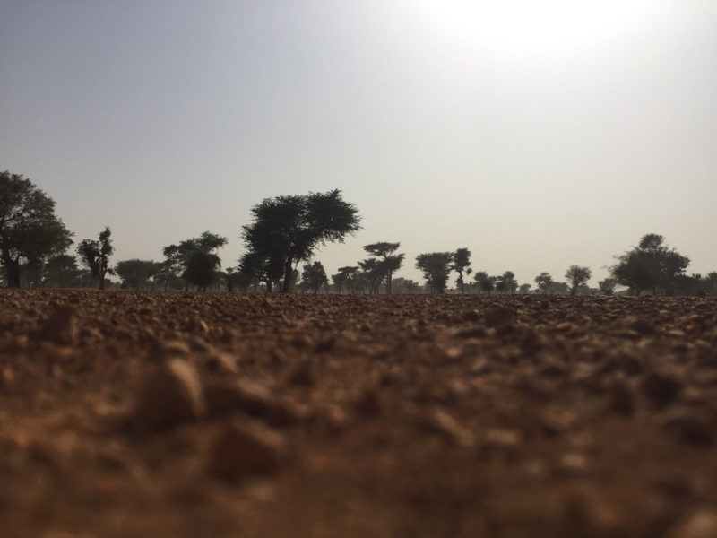 Senegal Akazien Wueste