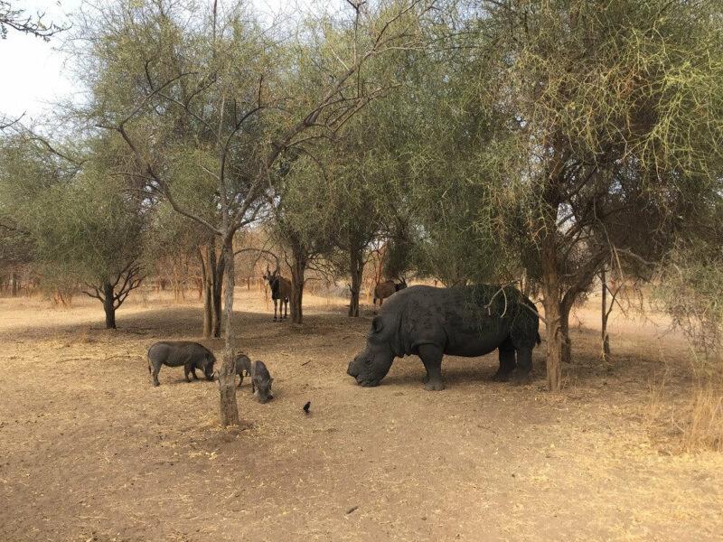 Senegal Naturreservat Bandia