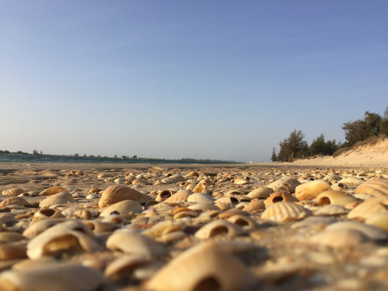Sengal Muscheln Strand
