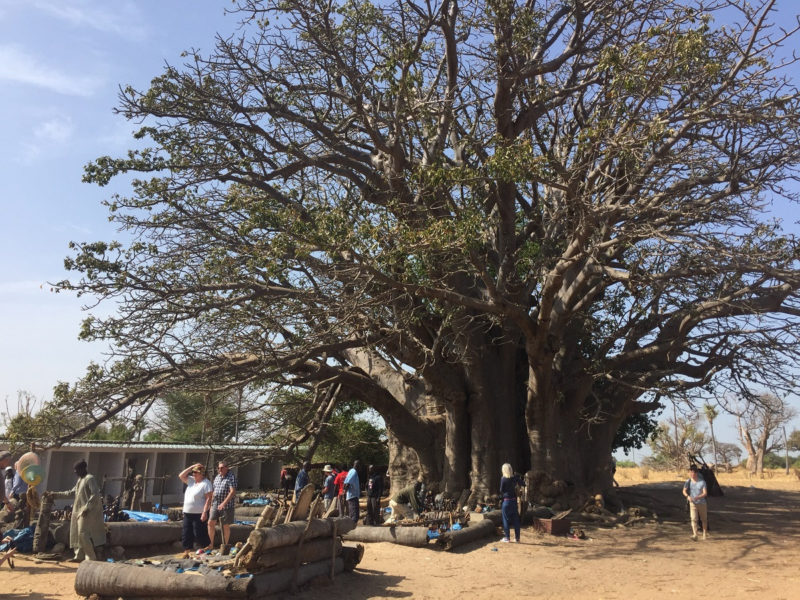 Senegal Affenbrotbaum Senegal