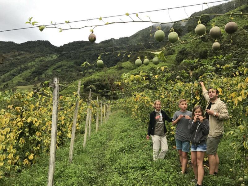 Plantage Kolumbien Chivor