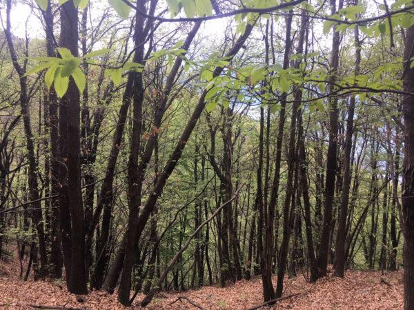 Wald Ticino