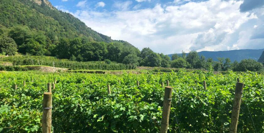 Valposchiavo – eine fast vergessene Wein-Region