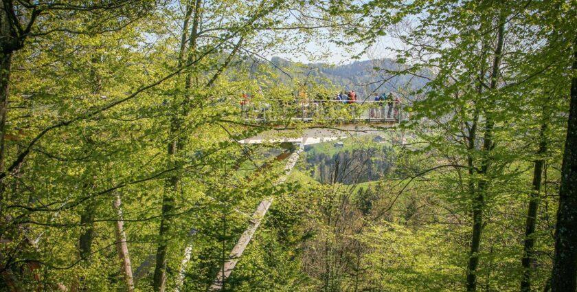 Baumwipfelpfad Neckertal – Wald spüren, erleben und geniessen
