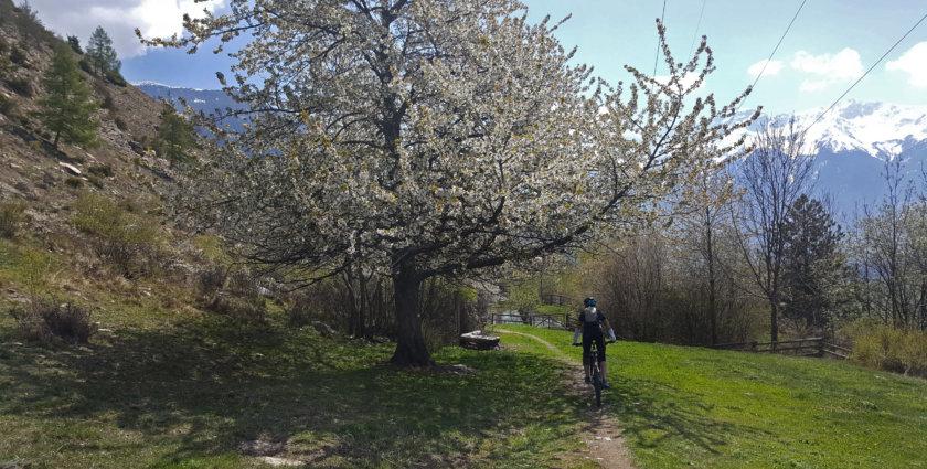 Trails, Trails, Trails: Mountainbike-Mekka Vinschgau