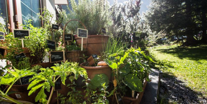 Zu Besuch im Kräutergarten von Ronja Falbesoner